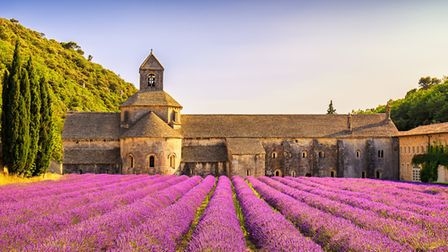 Lavender growing outside the Abbey of Senanque in the Luberon. Pic: StevanZZ/Getty