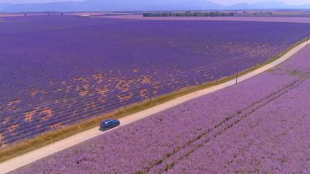 Lavender as far as the eye can see. Pic: helivideo/Getty