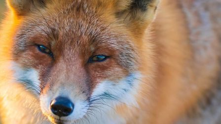 Learn idioms about sly foxes, cunning monkeys and more. Pic: Sander Meertins/Getty