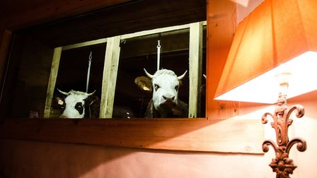 The cows watching on at the Ferme de Victorine. Pic: OT Val d'Arly