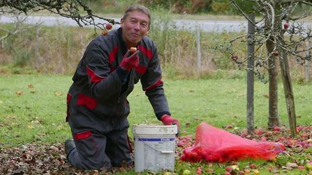 Rene collecting (and tasting) apples in the orchard. Pic: Michael Cranmer