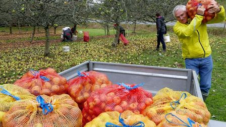 Loading the freshly picked apples. Pic: Michael Cranmer