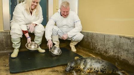 Eliane and Chris Fairfax feed the one of the seals caught up in the tidal surge in December, which a