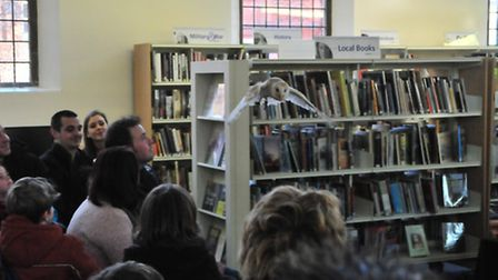 Sky the barn owl in flight at Cromer library's Animal Magic wildlife session. Photo : DUNCAN ABEL