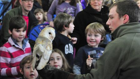 Cromer library wildlife session - getting up close to an owl. Photo : DUNCAN ABEL
