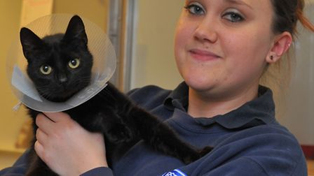 Cats in need of foster homes at the RSPCA in Norwich. Claire Feek with Cherry Pie. Photo: Bill Smith