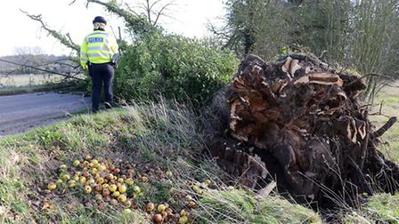 A fallen tree blocks the road on Great Heath Road off the B1110 at North Elmham. Picture: Matthew Us