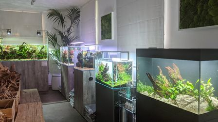 Scaped Nature in Norwich has everything you need to get started with aquascaping. Picture: Scaped Na