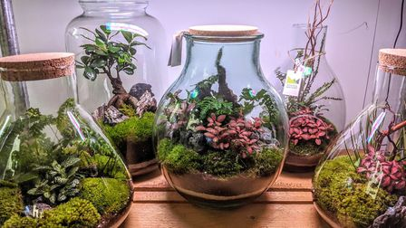 Scaped Nature also offers everything you need to create a terrarium. Picture: Scaped Nature