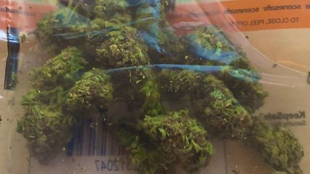 The cannabis which was seized by police in Hunstanton Picture: Norfolk Constabulary