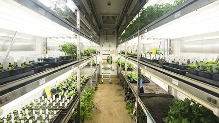 A 5.1m project will modernise the horticultural facilities at the John Innes Centre in Norwich, incl