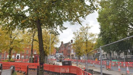 Norfolk County Council wants to take down two lime trees as part of the new Tombland revamp scheme,