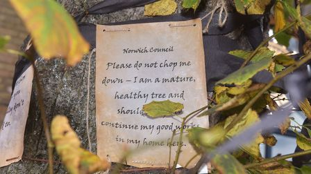 A message from local residents to Norfolk County Council on one of the two lime trees which will be