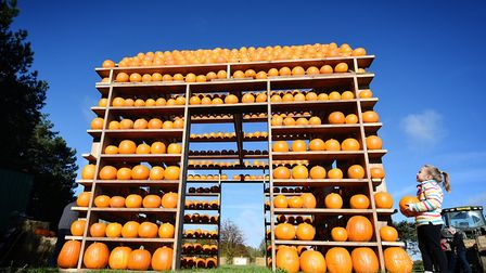 The Pumpkin House in Thursford is one of the places where you can pick your own pumpkins in Norfolk