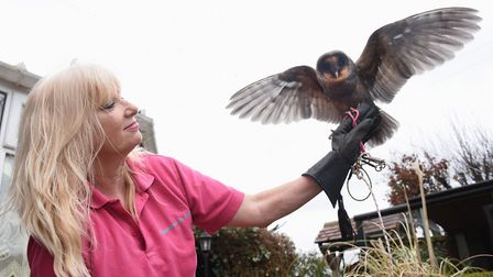 Happisburgh Owls tops the list as owner Sandra Dalzell welcomes you to get up close with her owls Pi