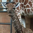 The new arrival at Africa Alive!. Pic: supplied