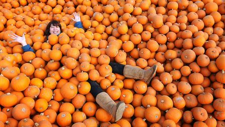 Abbie Panks from the Fairyland Trust picks up 250 pumpkins for the Real Halloween event being held a