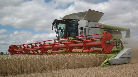 Extreme weather has forced a significant drop in yields for East Anglia's cereal crops during the 20