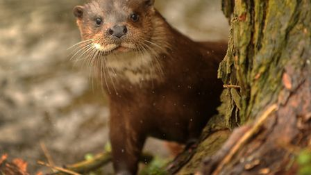 Paul Rackham and Paul Rackham Ltd have been accused of destroying otter and vole breeding sites P