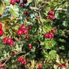 A bit of autumnal beauty to lift the spirits ahead of what could be a difficult winter for many