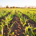 The world's food production is under massive strain, and scientists at Norwich Research Park are wor