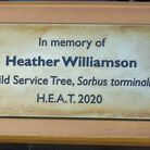 Tree planted in Hethersett in tribute to Heather Williamson. PIC: Peter Steward.
