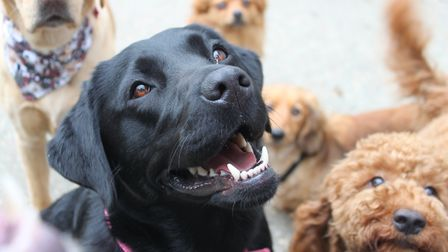 Should your business be dog friendly? Owners in Norfolk have said it's a savvy business decision. Pi
