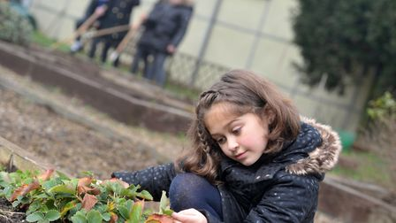 Carlton Colville Primary School's gardening club working hard on their allotment. Viva checking in o