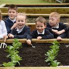 Pupils with the broad beans growing at Nightingale Infant School at Taverham Picture: DENISE BRADL