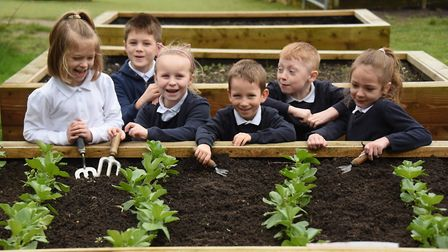 Pupils with the broad beans growing at Nightingale Infant School at Taverham, for the Plant to Plate