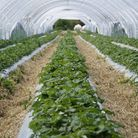 Out-of-work Brits have been urged to fill fruit-picking jobs on farms as coronavirus restrictions pr