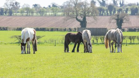 World Horse Welfare is looking after record numbers of animals Picture: World Horse Welfare