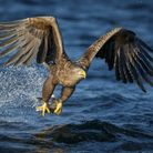 A rare white-tailed eagle has been seen over Norfolk Picture: Getty Images/iStockphoto/Neil_Burt