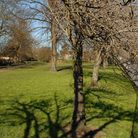 File pictgure of Sewell Park, Norwich. PIC: James Bass.