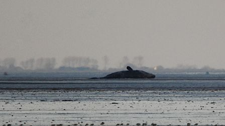 The whale is on tidal mud flats around a mile off the beach at Snettisham