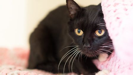 Mary – 8 year old black and white female. Mary is a shy little girl with a heart of gold. She would