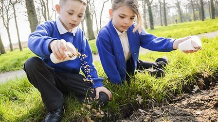 Pupils for Howards Infants and Junior School plant poppy seeds at Plantation WWI - Malakai Took (7)