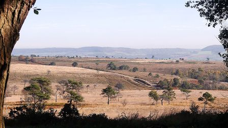 A favourite view of the heaths by Barbara Mellor.