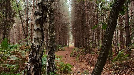 A dog walker has reported sighting a naked man in Rendlesham Forest. Picture: TIM DENNEY