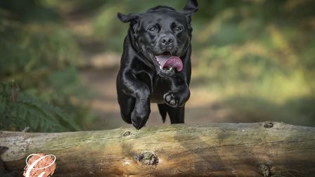 Some of Nigel's best shots include dogs leaping through the air Picture: Nigel Wallace Photography