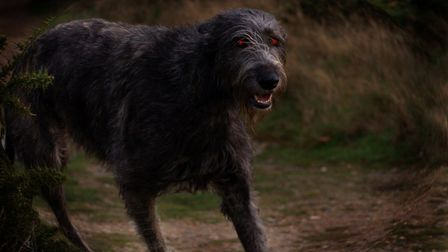 Does the legendary spectral hound Black Shuck roam the ruins of Bigod's Castle? Picture: Archant Library