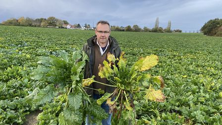 John Taylor - pictured holding a healthy sugar beet plant and one with virus yellows - says for the