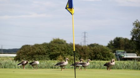 Golf courses will remain shut for a month