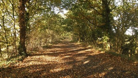 Hadleigh's Railway Walk - potential home to a headless horseman who rides along the track Picture: M