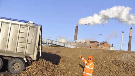 East Anglian sugar beet growers supply British Sugar factories like this one at Bury St Edmunds with