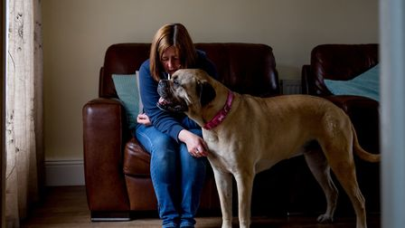 The Dogs Trust urgently needs foster carers in Suffolk to look after dogs belonging to people fleein