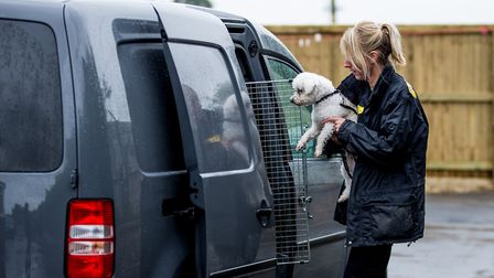 An appeal is going out from the Dogs Trust for foster carers in Suffolk to look after dogs belonging