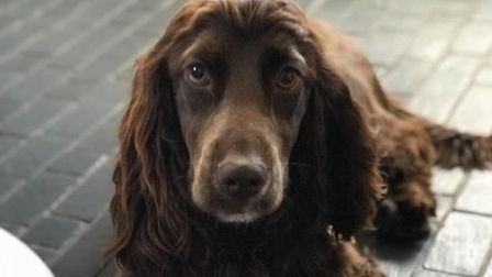 Two of the dogs stolen from Fiveways Boarding Kennels and Cattery belonged to a family who had left