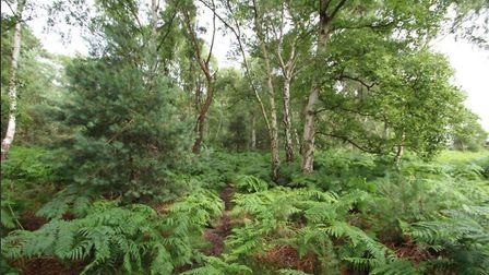 Around three acres of woodland has gone up for sale Picture: MARKS & MANN