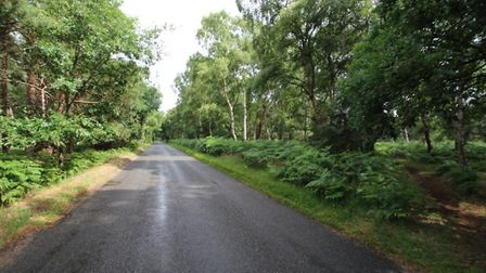 Woodland in Hollesley has gone up for sale Picture: MARKS & MANN